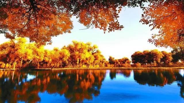一眼望去,阳光下金色的树叶趁着湛蓝的天空于风中婆娑起舞,那种强烈的
